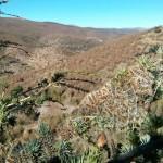 Los bosques almerienses encajan mal el cambio climático
